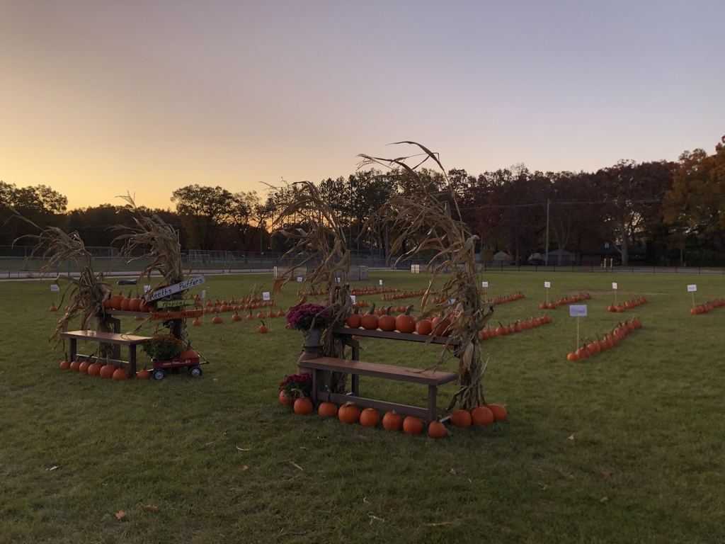 Wider view of the Magic Pumpkin Patch