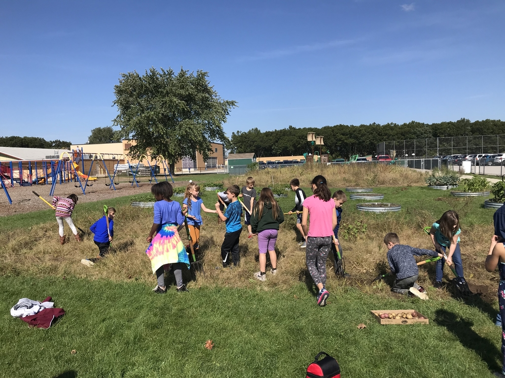 Mrs. Boes third graders digging potatoes